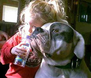 American Bulldog - Blue aka Johnsons Rebel Rouiser 52 and our daughter candace when she was 2