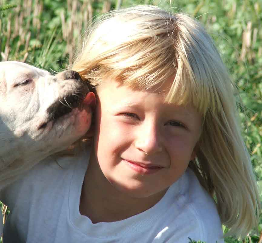 american bulldog puppy licking a child
